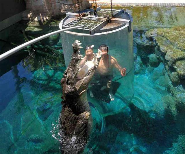 Экстремальный аттракцион «Клетка Смерти» в Дарвине (Австралия)