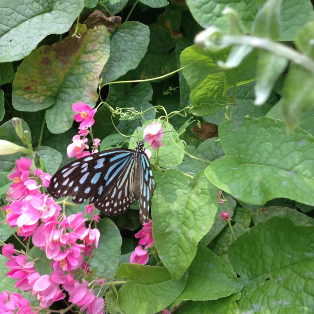 Сад бабочек на острове Самуи