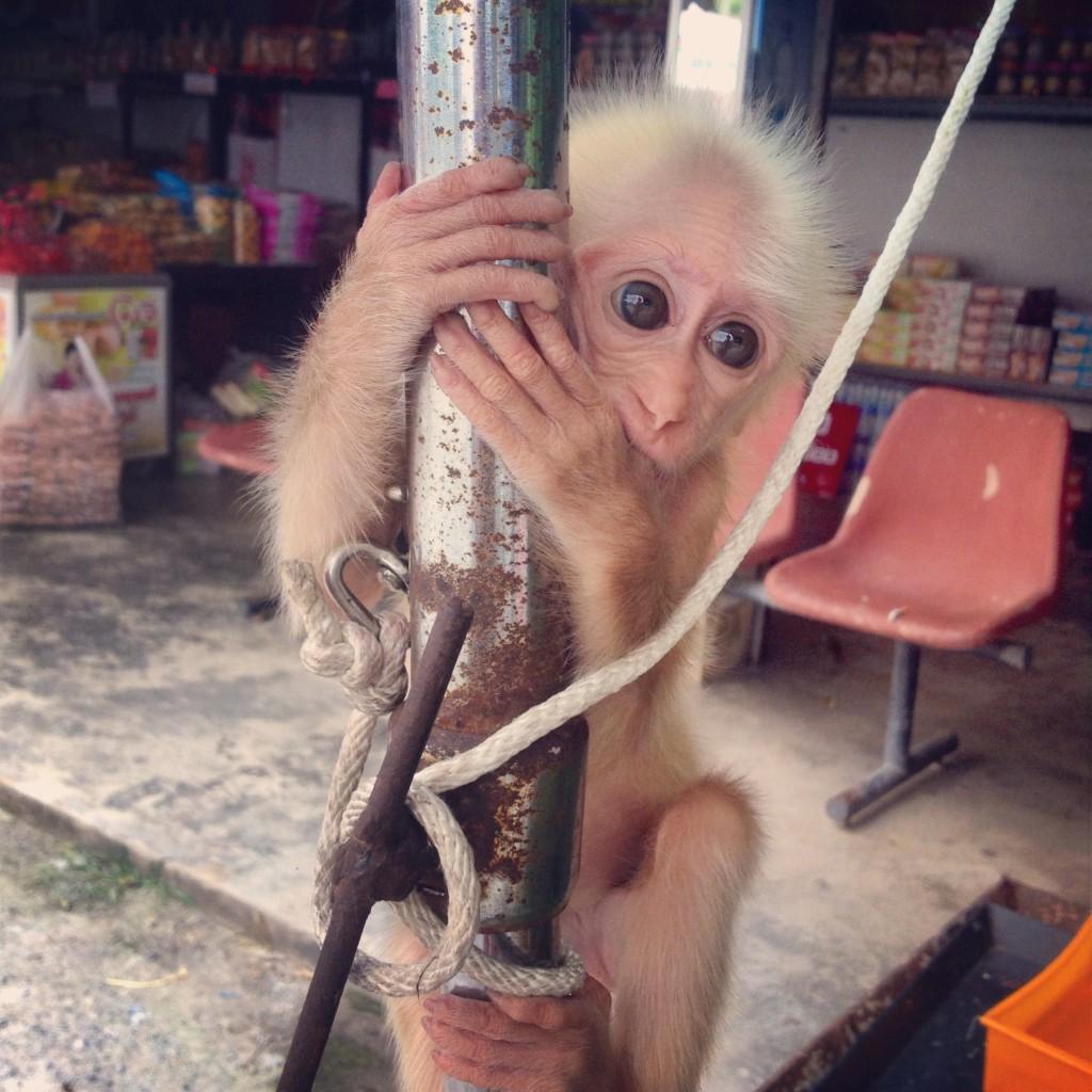 та самая маленькая обезьянка