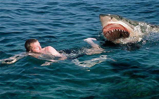 Вы тоже боитесь смотреть видео, где белые акулы нападают на людей?
