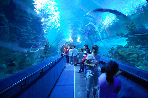 kuala-lumpur-aquaria