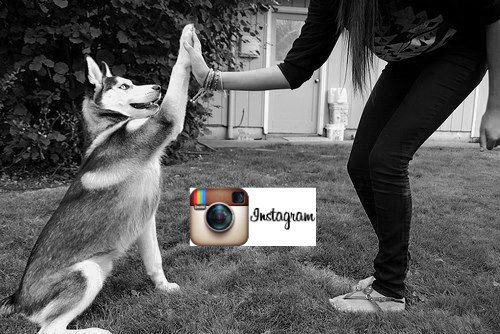 Как опубликовать фото в instagram с компьютера (предварительные лайки: часть 2)