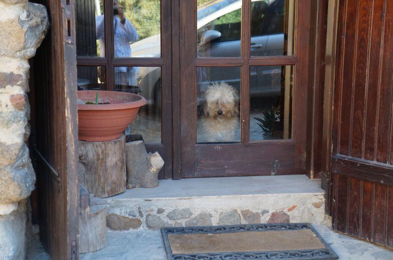 собака смотрит через дверь