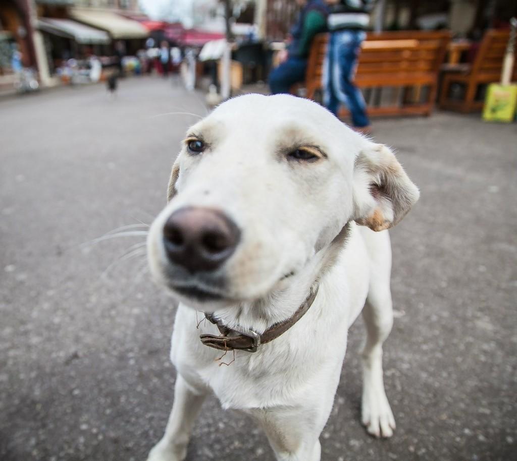 подозревака собака