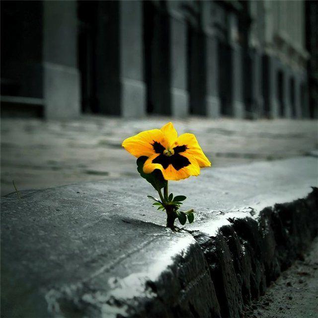 Растет не смотря ни на что
