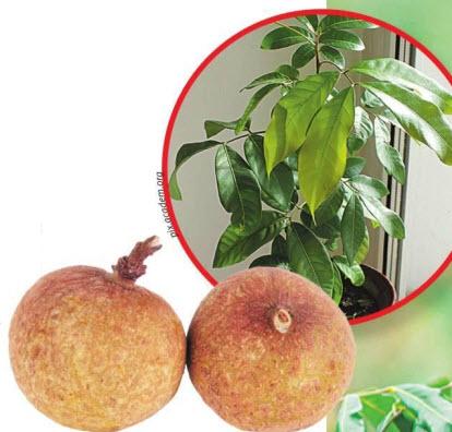 выращиваем в домашних условиях
