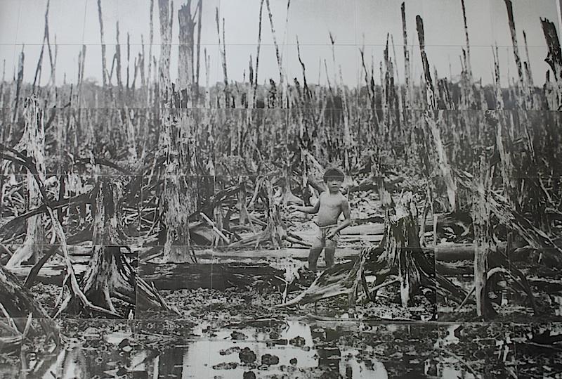 мангровые заросли Вьетнамской войны