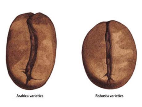как отличить арабику от робусты