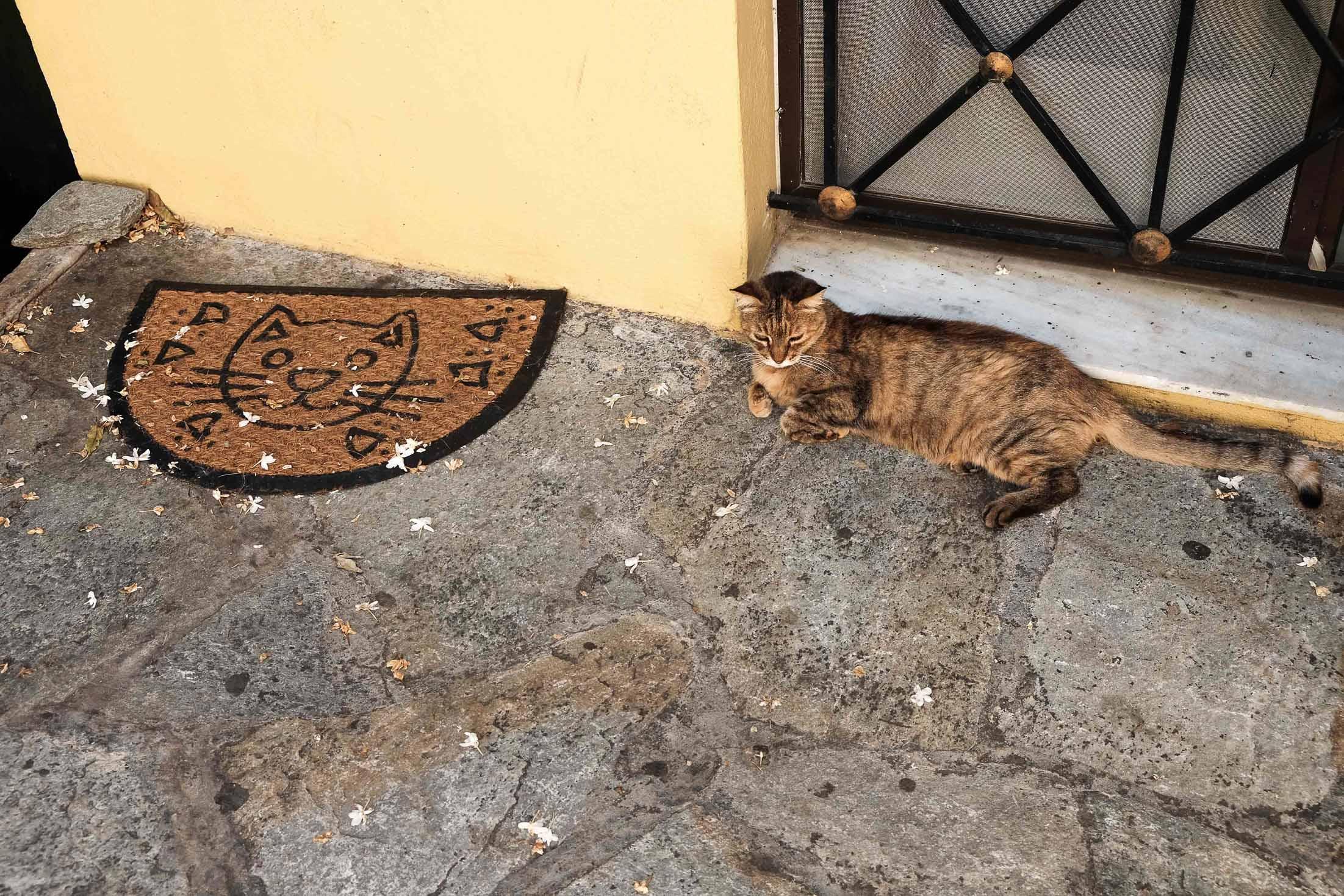 коты в Афинах