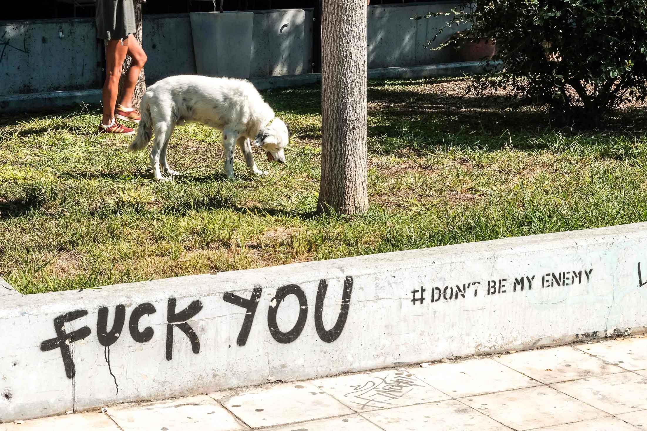 собаки шлют привет
