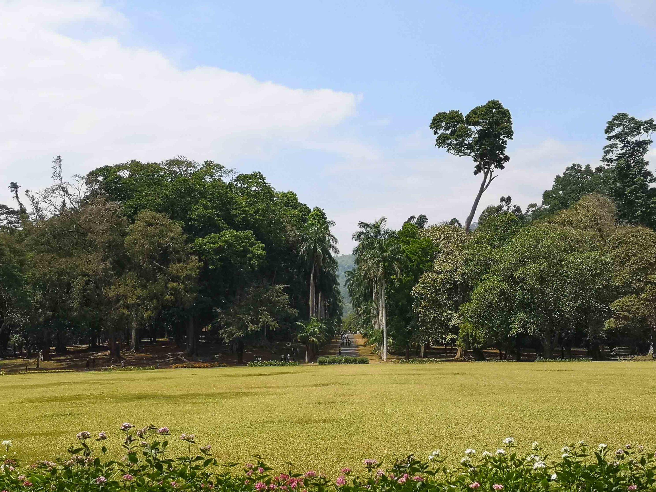 канди ботанический сад фото